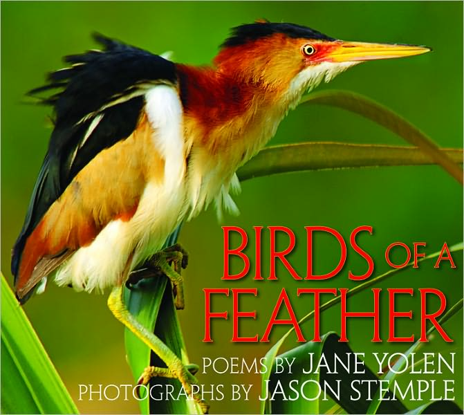Children's Review: <i>Birds of a Feather</i>